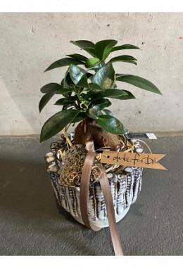Bonsai Pflanzen Arangement im Keramikgefäss DM 13