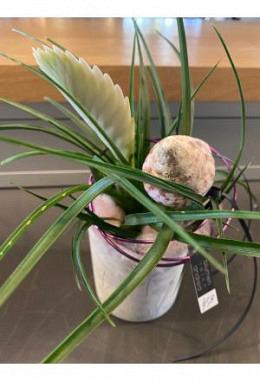 Pflanze Tilanzien weiss im Windlichtglas DM 9