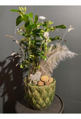 Orchidee im Keramikgefäss H 55 / DM 19