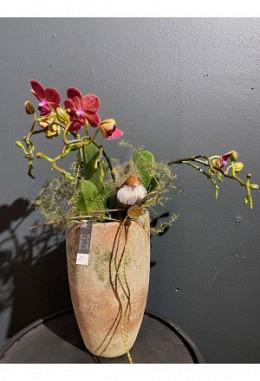 Orchidee im Keramikgefäss H 32 / DM 13