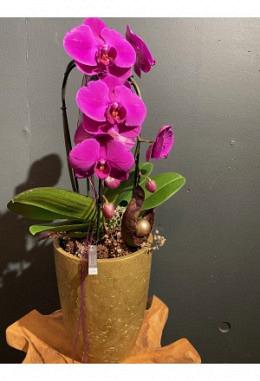 Orchidee im Keramikgefäss H 66 / DM 20