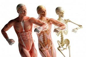 Formation en pathologies – Cycle 1
