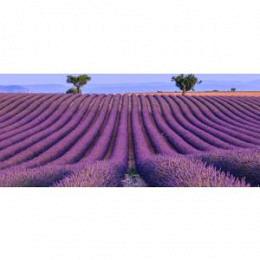 w.Lavendelblüten ganz